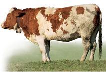 Livestock RFID Tracking Solutions