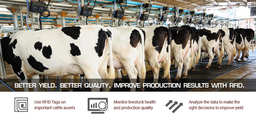 GAO-RFID-SOLUTIONS-FOR-CATTLE-DAIRY-PRODUCTION
